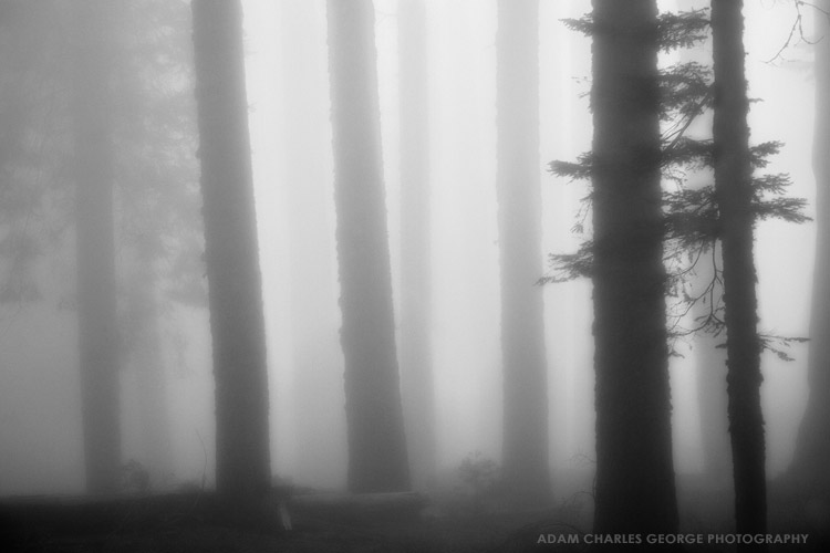 Sequoia National Forest by Adam Charles George Photography